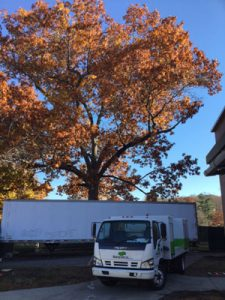 SavATree Truck in front of tree