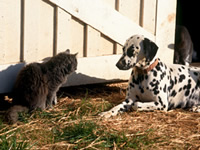 dog and cat tick control