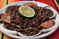 Plate of Bugs