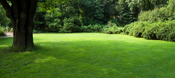 green lawn and landscape
