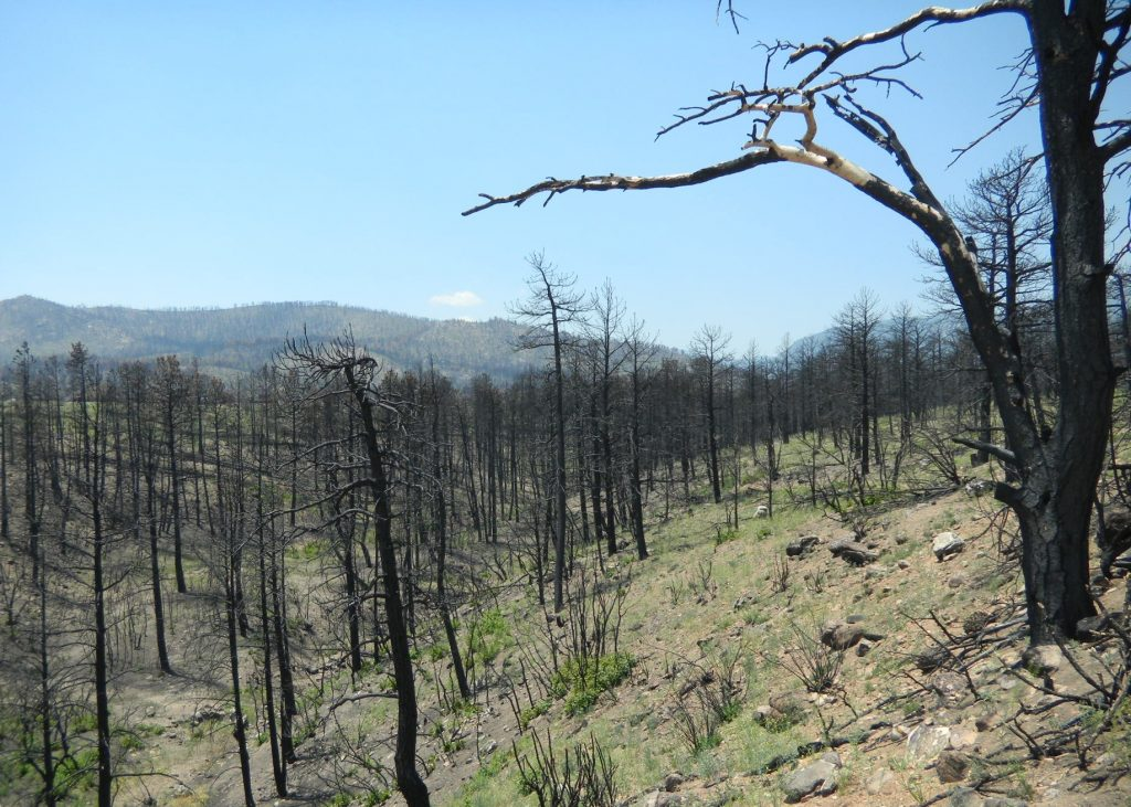 barren forest after wildfire